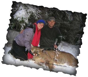 A friendly and family oriented outfitter and guide service.  Listen to the baying hounds as they tree your Cougar or Bear.   Idaho Whitetail Guides.